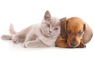 Puppy and Kitten Insurance