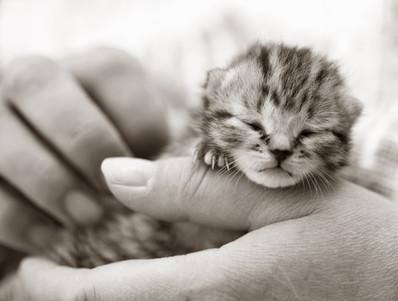 Top ten kitten names for 2014