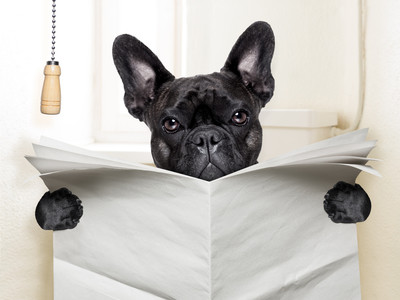 Toilet training puppy – a wee guide!